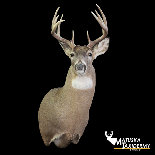 March19_WhitetailDeer.png