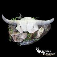 buffaloskull.png