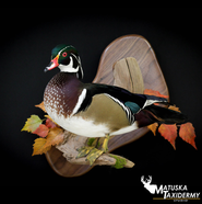 woodduck.png