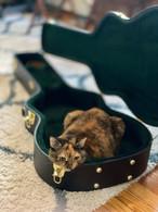 Daisy the cat inside a guitar casejpg