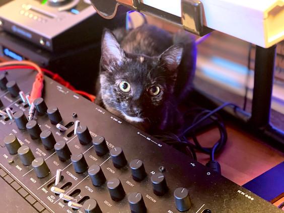 Lila the cat behind Korg Minilogue XD at The NoiseRoom Studio.jpg