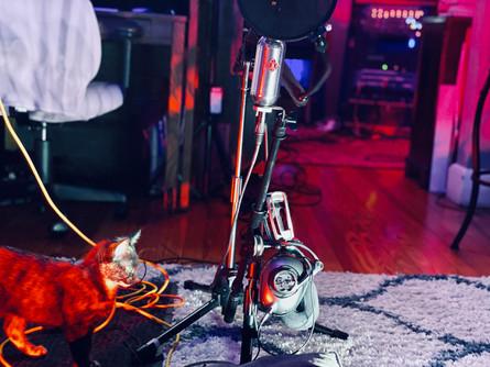 Lila the cat Blue Microphone Headphones at The NoiseRoom Studio.jpg