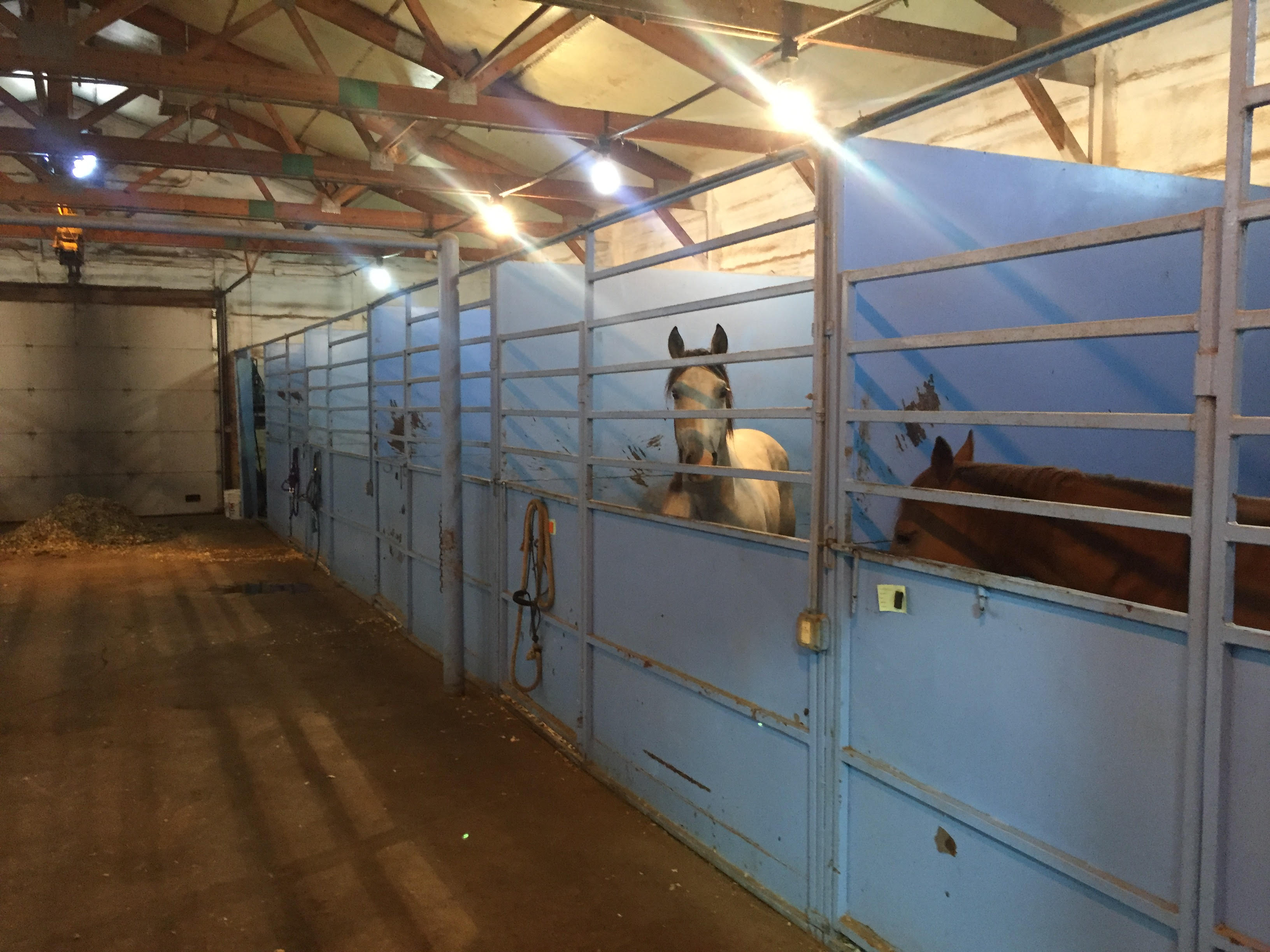 Equine facilities