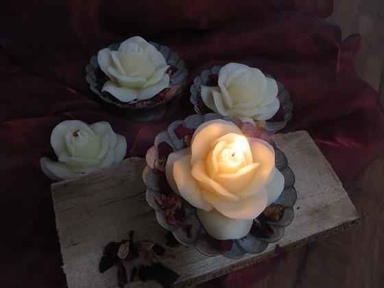 Rose in Schale