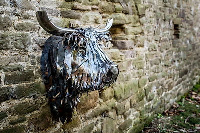 Fergus the metal highland cow sculpture made from scap metal from a Mini Cooper car