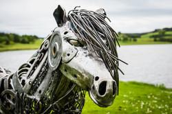 Mgnus, the Shetland Pony