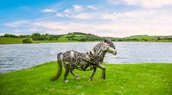 Magnus the Shetland Pony