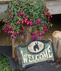 Diamond d mule farm welcome page hillsboro, ohio