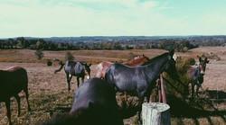Diamond D Mule Farm- Hannah Van Zant