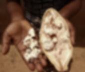 baobabhand.jpg