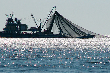 La chia comme source renouvelable d'oméga 3 : une alternative à la surpêche