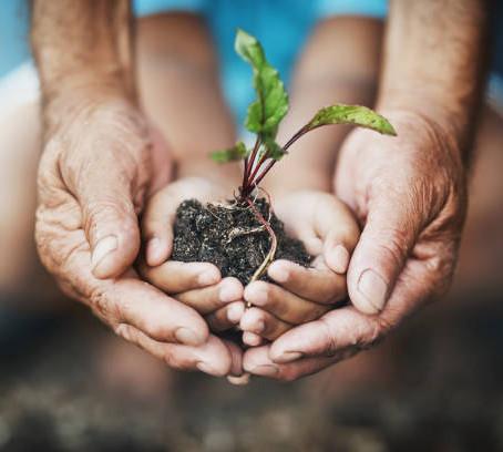 A quoi ressemble le développement de l'agriculture biologique en France ?