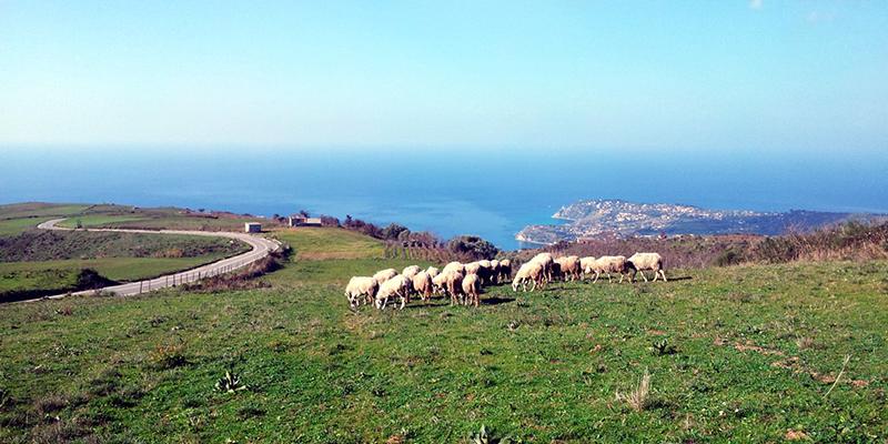 Monte Poro