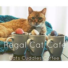 calgary regal cat cafe