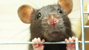 Cruelty Free / COVID-19 news