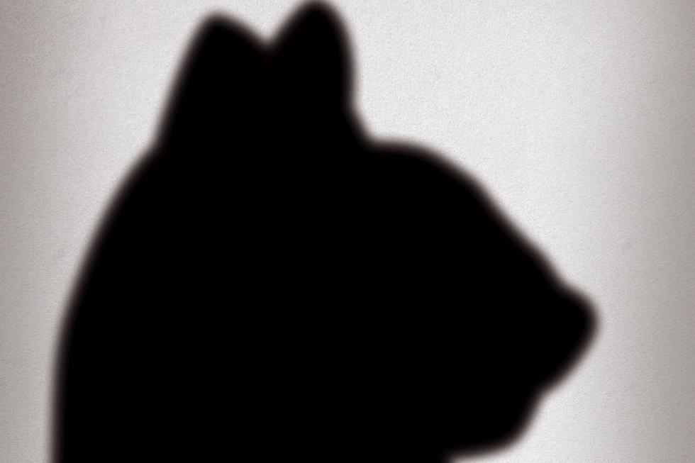 pet_shadow_00.jpg