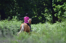 Website Riding Club 2