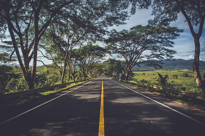 asphalt-environment-grass-239520.jpg