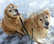 Dog walker in Brunswick ME