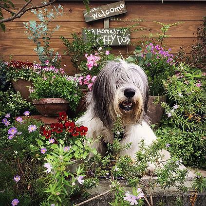 Dog Homestay FLUFFY DOG Polish Lowland S