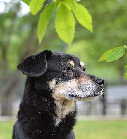 Dog Homestay FLUFFY DOG