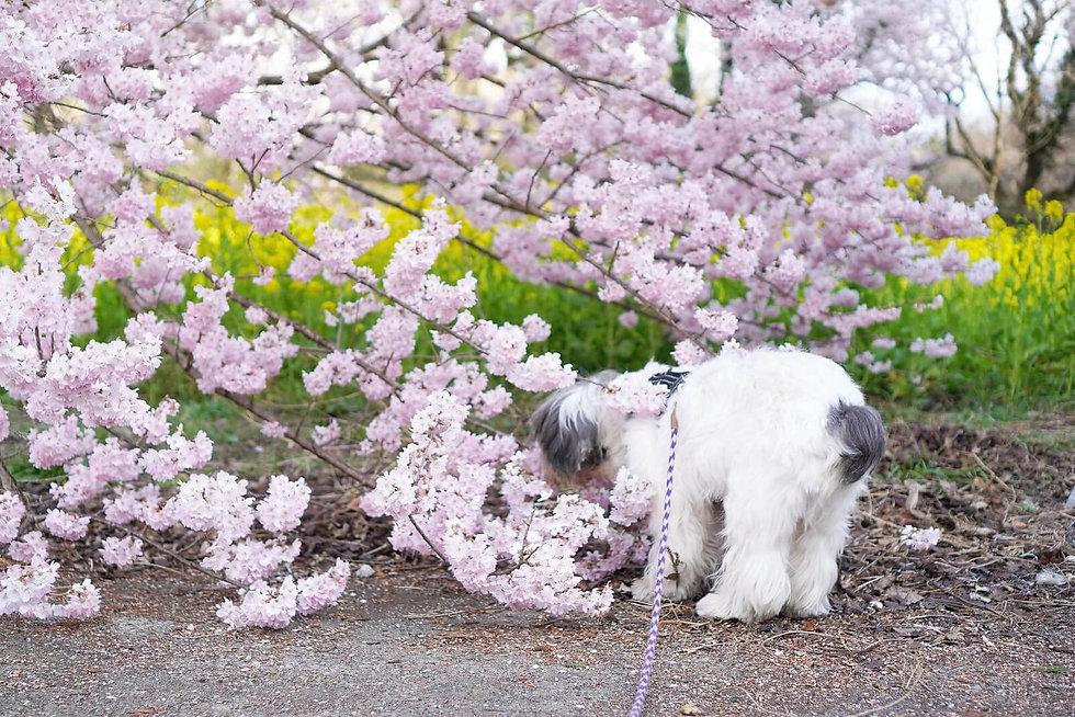 Dog Homestay FLUFFY DOG 大キチィ