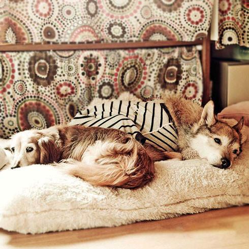 シニア犬 senior dog