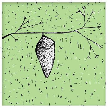 03-mariposa.jpg