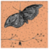 05-mariposa.jpg