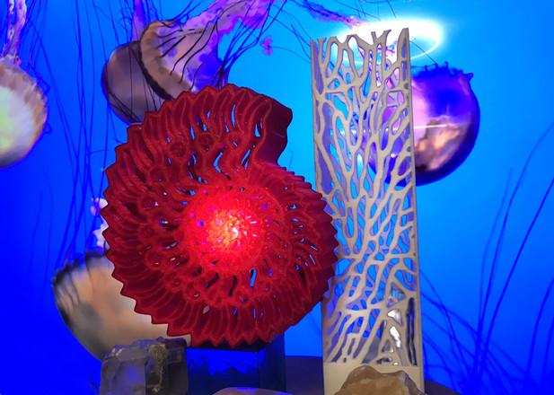 nautilus-coral דן קלינגר.jpg