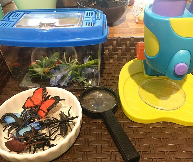 Bug Exploration Station 🐛🦋🐞🐝🐜 #bugs #Invitationtoplay #preschool #yycpreschool #doodlebug #scie