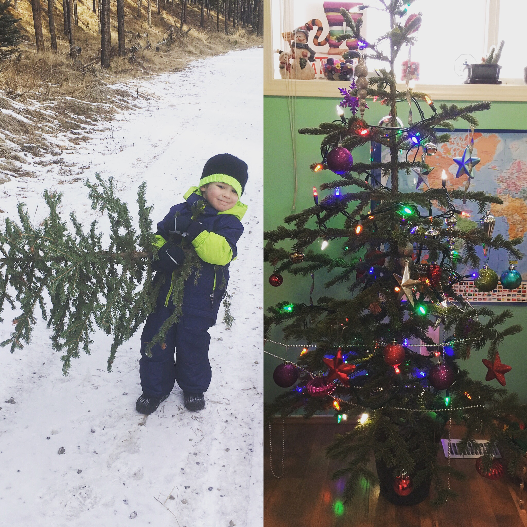 Christmas Tree Adventures