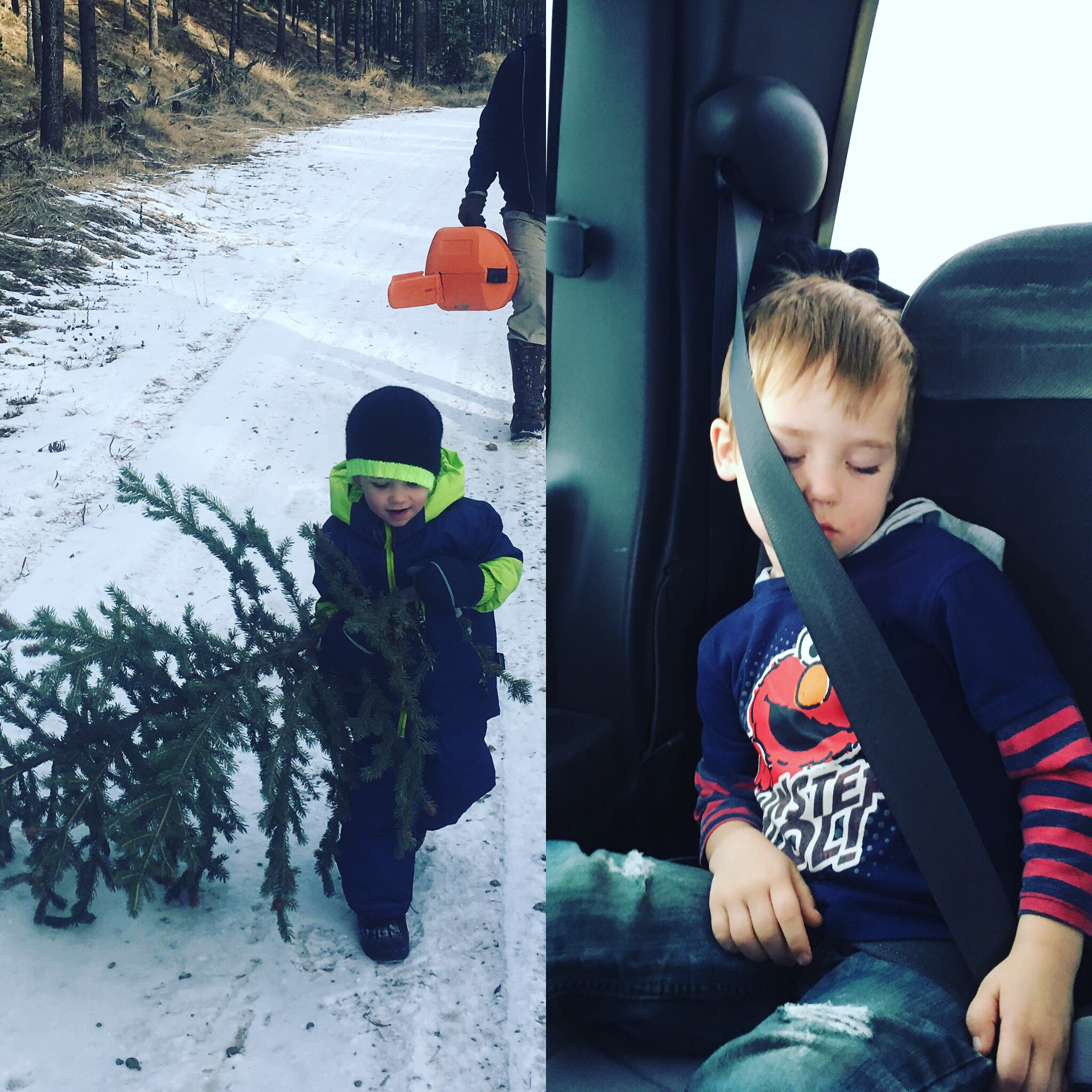 Christmas Tree adventure