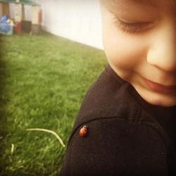 _Oh hello Mrs ladybug_ #nature #doodlebuglearning #preschoollife #doodlebug #ladybug