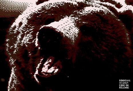 Bears!-1.JPG
