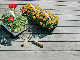 5 Easy-To-Grow Flowers For Summer