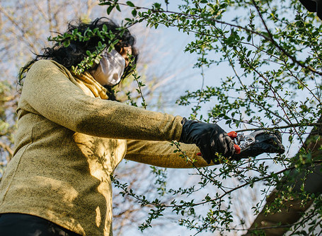 Proper pruning is all about the right tools