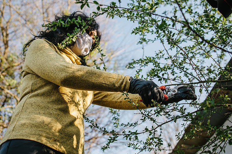 Woman in mask and gloves prunes branches in a tree using proper tools