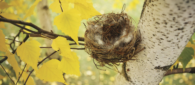 What is empty nest syndrome? How do you cope with it?