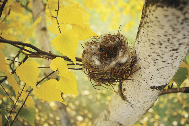 Concept image of Empty Nest in a tree
