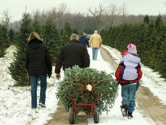 Tips for selecting the 'perfect' Christmas Tree