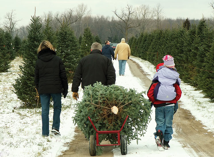 family hauls cut Christmas tree out to the car snow holidays