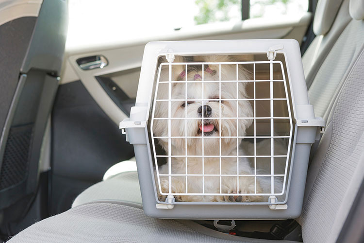 Dog in a pet carrier on  the back seat of a car