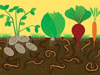 The Magical Little Earthworm