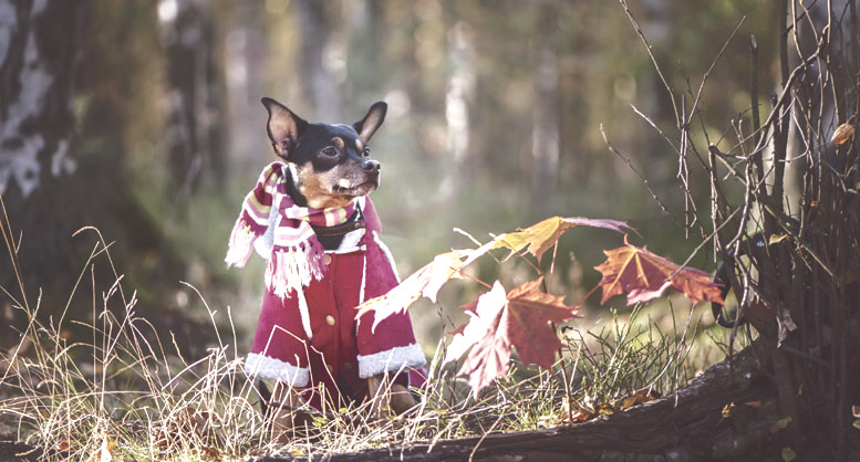 Small doggo sitting in a field wearing a sweater and a scarf
