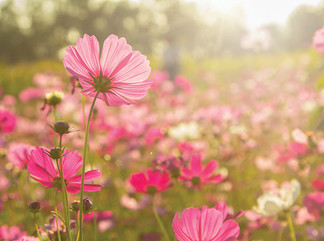 The flowers for October are cosmos and marigolds