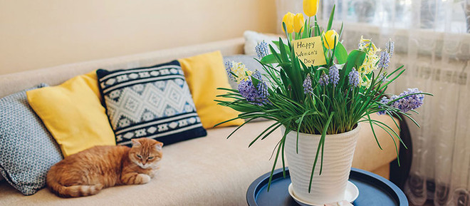 Easy-Peasy Ways to Update Your   Spring Decorating Ambitions