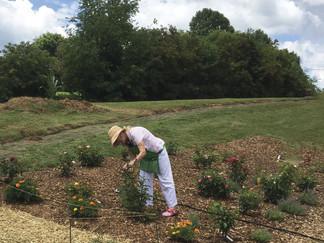 Master gardener volunteers: An invaluable community resource