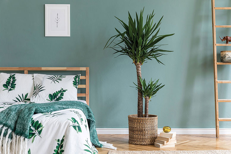 looking at a spikey green plant in a bedroom in front of a green wall