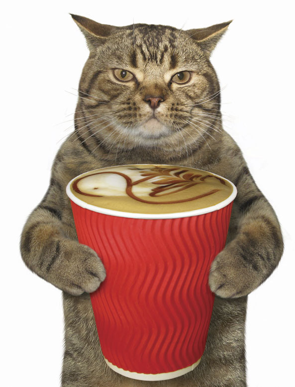 cat holding coffee